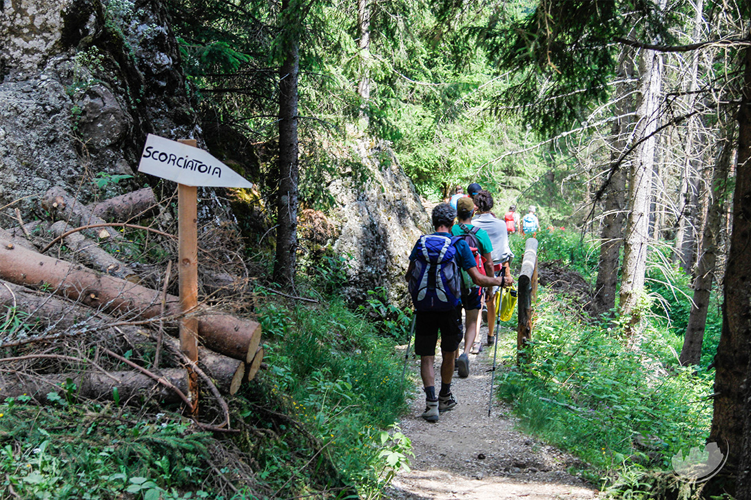 hiking in the forest val di fassa